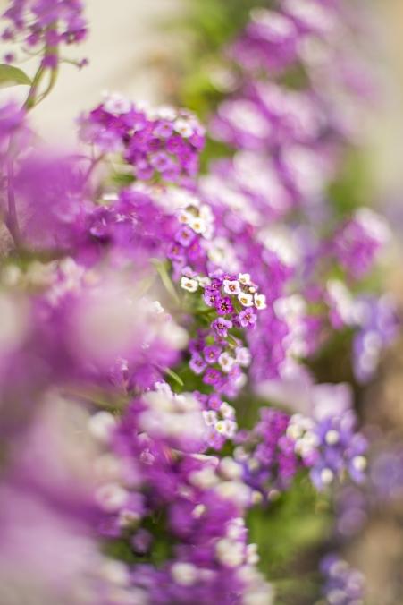 spring_04192017_1.jpg