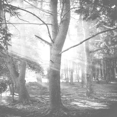 light_tree_06142017_1