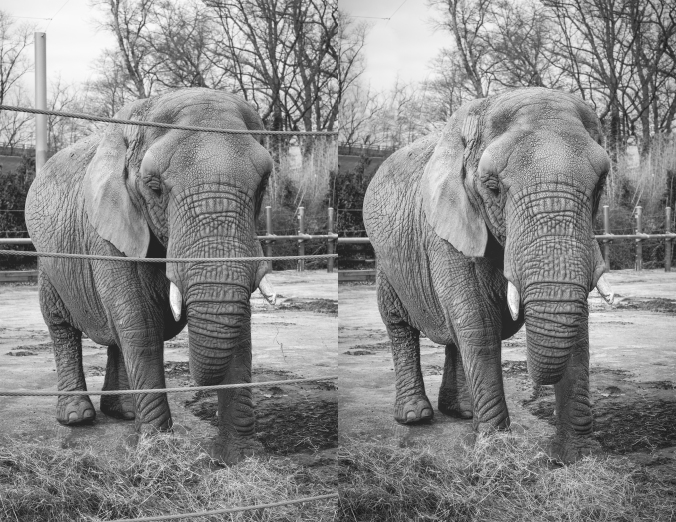 elephant_compare