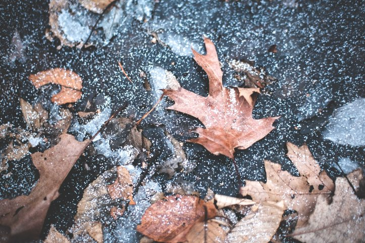 frozen_leaf_01192019