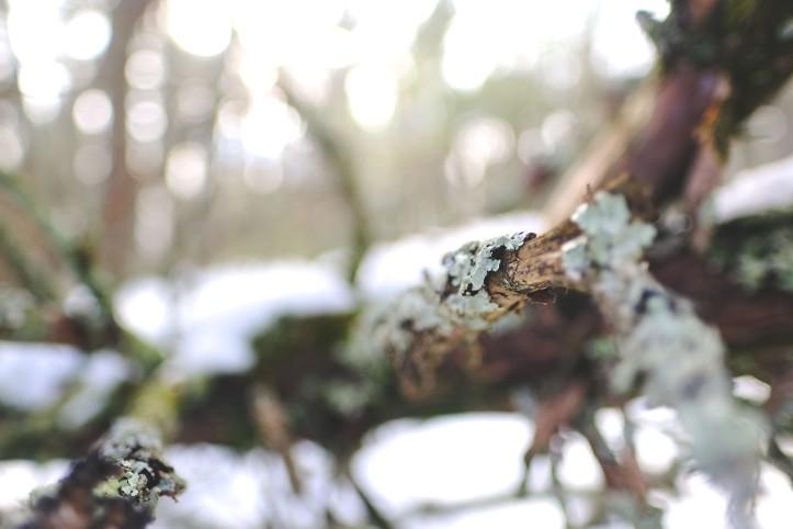 winter_03032019-6
