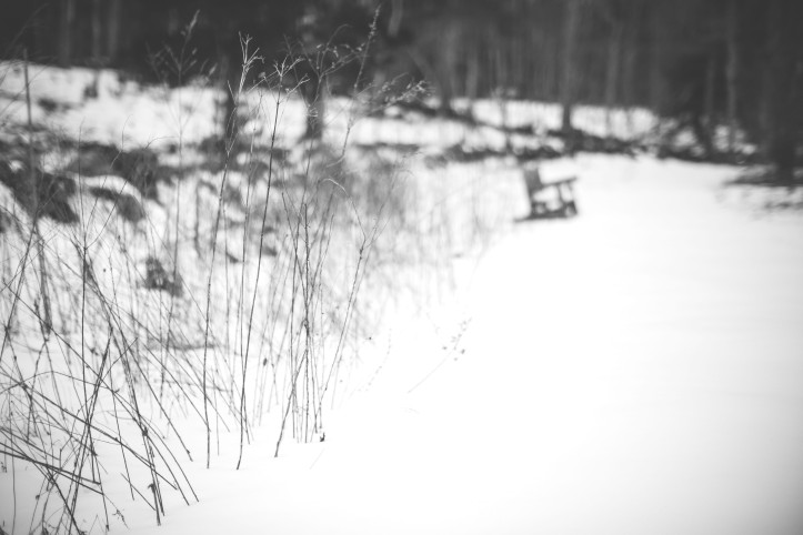 winter_03032019-8