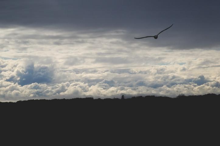 seagull_04152019