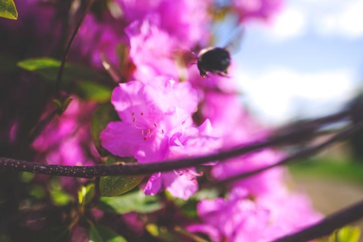 spring_04272019-3