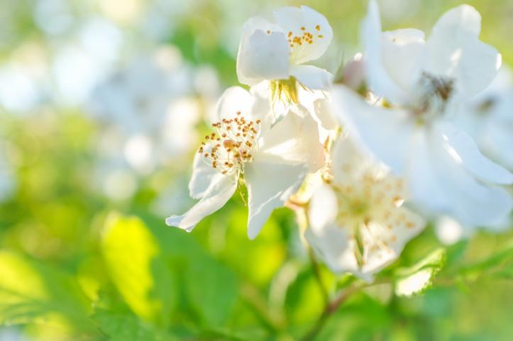 bright_flower_06092019