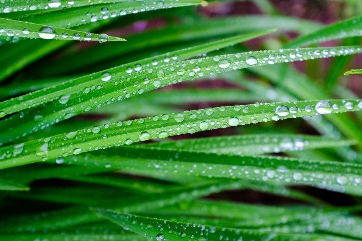 drops_grass_06162019