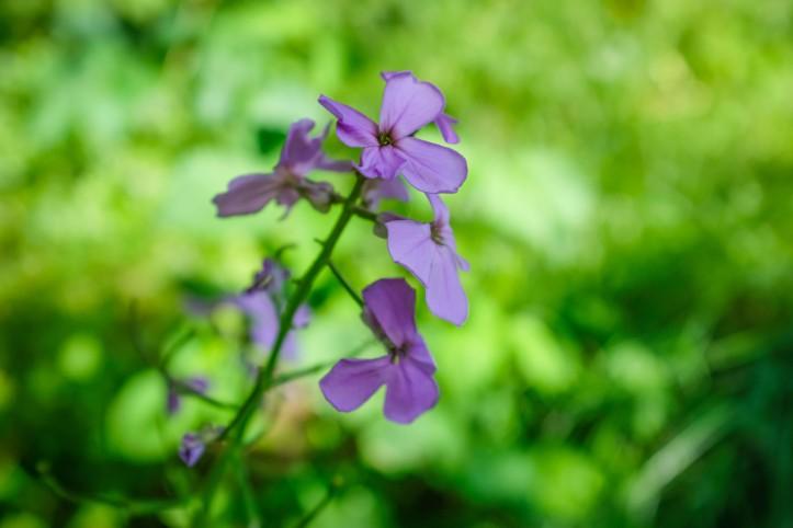 flowers_06152019-2