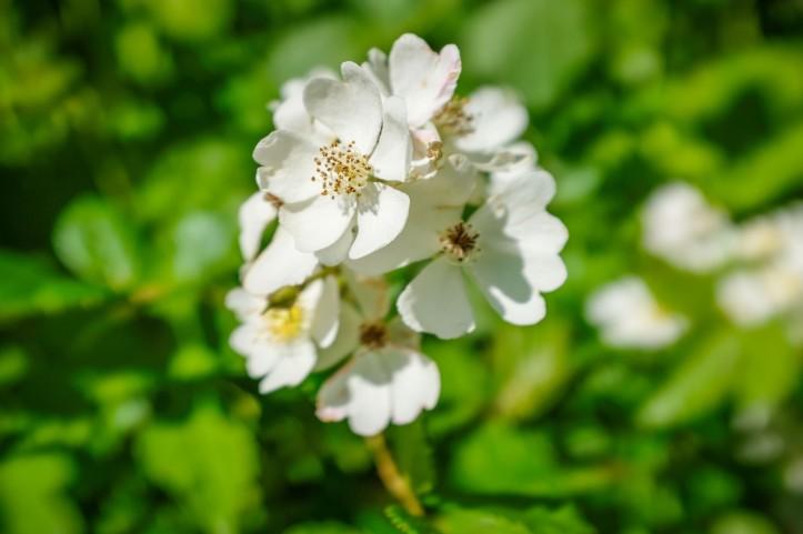 flowers_06152019