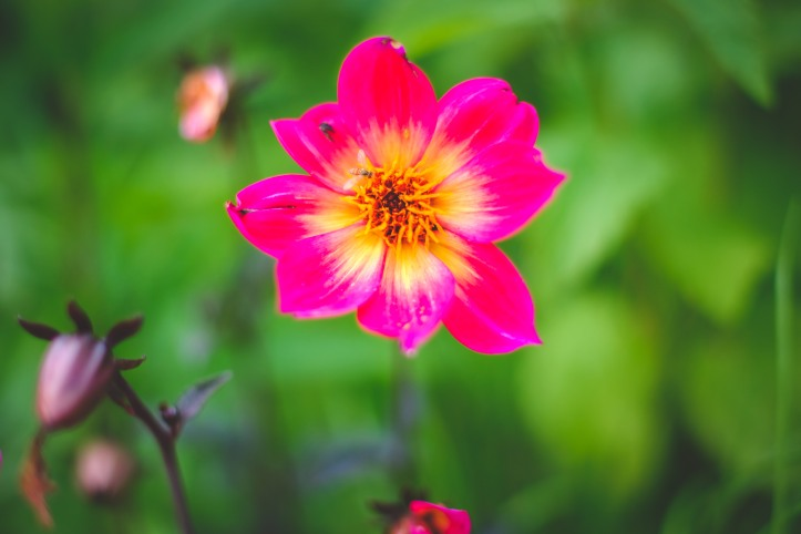 flowers_06192019-2