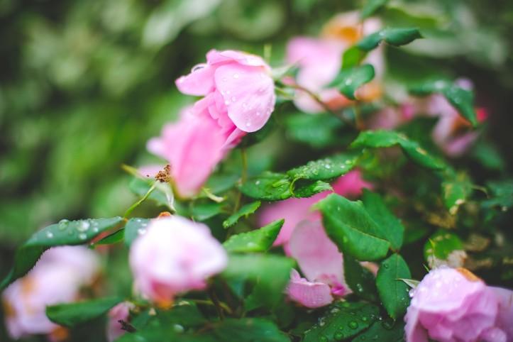 flowers_06192019