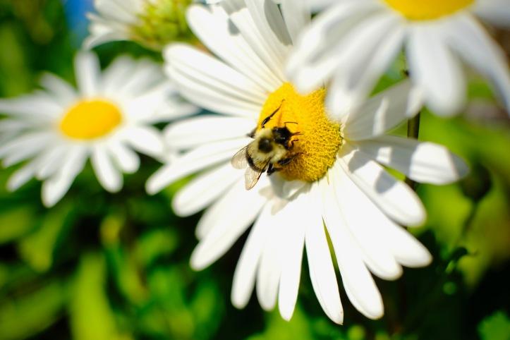 100519_bee_flower