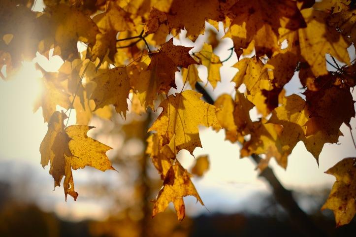 autumn_102619
