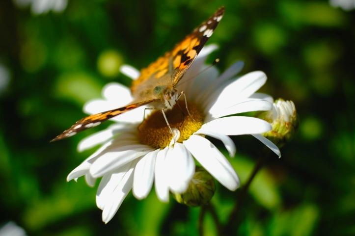 butterfly_100519