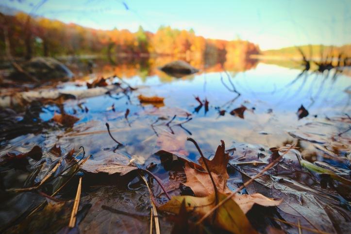 fallen_autumn_leafs_102919.jpeg