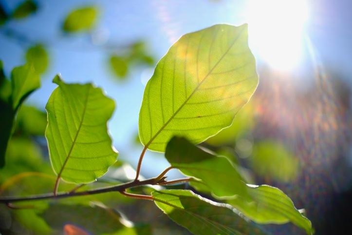 Leaf_100519