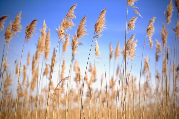 Sea_Grass_122919_1