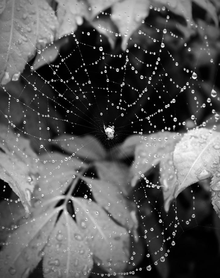 Spider_071313