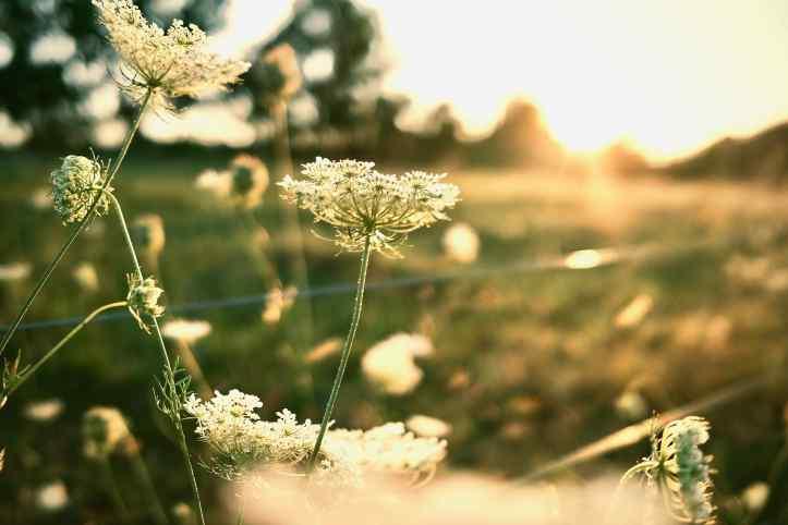 flower_081120
